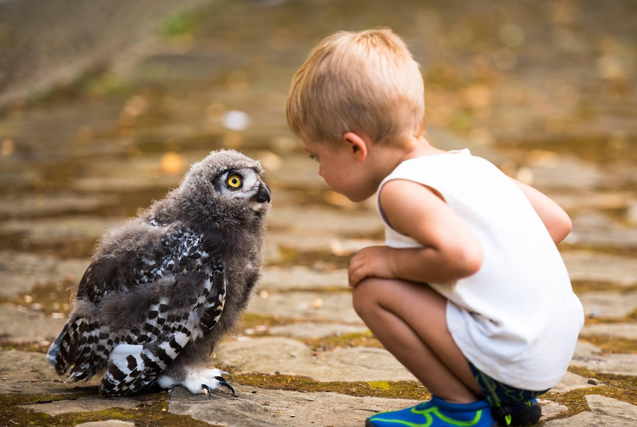 Chlapec a sova Sokoliarov Kráľa Svätopluka