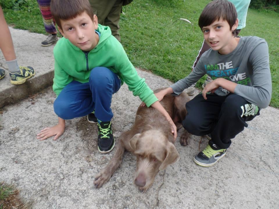 chlapci so psom