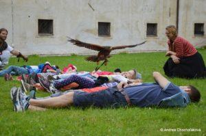 sokol leti ponad deti