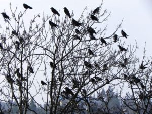 vtaky na strome
