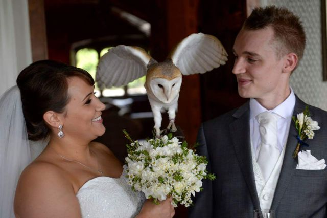 svadba so sokoliarmi